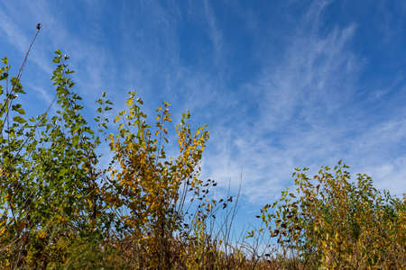 Small trees with leaves of green and golden yellow just beginning to turn, early autumn fall foliage, horizontal aspect