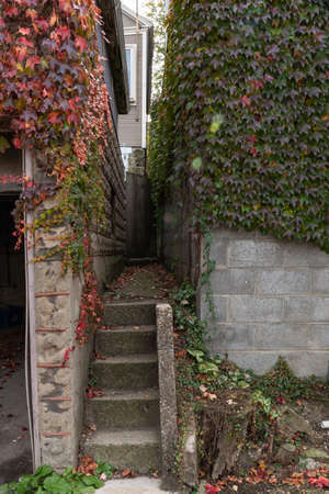 Extremely narrow walkway and stairs between two detached garages, ivy wall covering, vertical aspect Foto de archivo