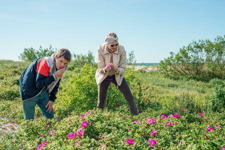 cobrar: La gente recoge hojas de rosa salvaje