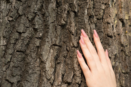 sensations: Female hand with long nails touching tree