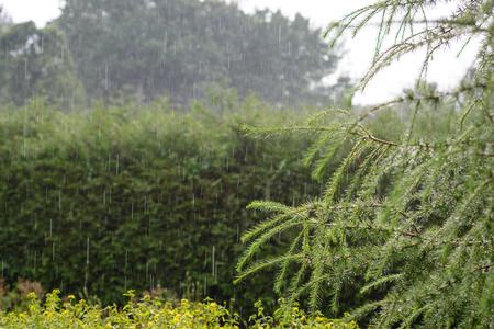 Summer rain in the garden