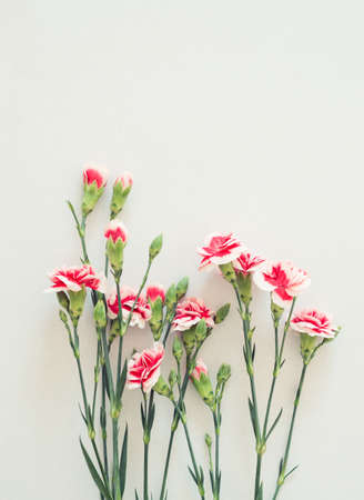 Postcard with fresh flowers of pink carnations