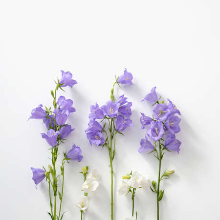 Flowers purple and white bells on white square background