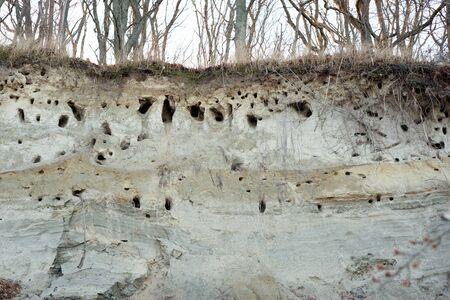 Nests of birds in a sandy rock