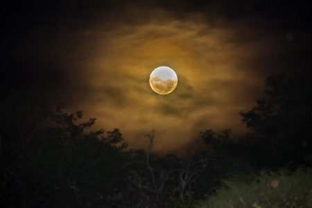 Mysterious, dark scene - eerie moon behind some dark trees, bushes and clouds  photo