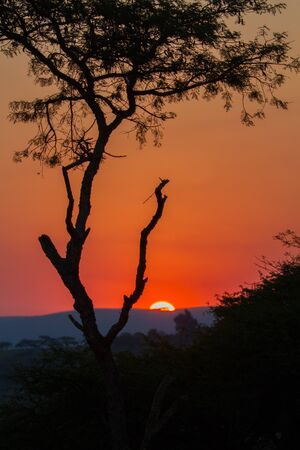 The sun setting in the distance behind the hills and trees  A typical African holiday and safari sunset in the bush  photo