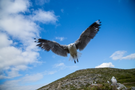A wide angle close up of a Seagull as it is hovering in the air photo