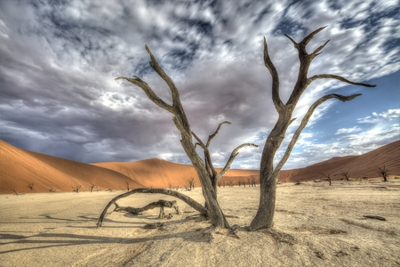A big old and dead acacia tree in the foreground by Deadvlei, Sossusvlei with red dunes in the background  This is in the Namib-Naukluft park in Namibia  This image consists out of 9 HDR images  Stock Photo