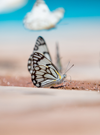 Butterflies by the swimming pool  One sitting in front sipping on some water drops and another flying past in the