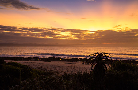 A surfer about to be the first one to paddle into the ocean at Supertubes, Jeffreys bay for a surf. The waves are breaking down the pointbreak with the sun rising in the back. The silhouette of an aloe, typically found at Supers, is in the foreground.