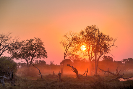 A red sunset scene taken at Khwai, Botswana. Camelthorn tree stumps in the foreground and fog hanging over the water.