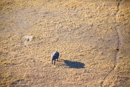 An aerial image of an elephant walking on the banks of the Okavango Delta with a long shadow as the sun is slowly setting.