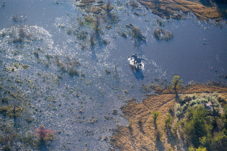 A aerial scene of the Okavango Delta with an elephant walking, making its way through the water.