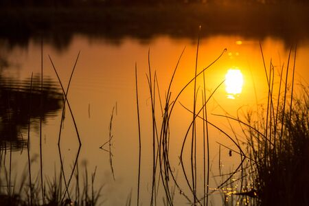 Calm water with the reflection between the reeds of the sun setting.