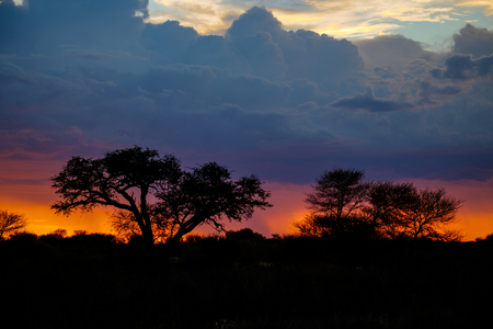Deep orange colours with sunset as a big thunderstorm approaches behind the trees. Stock Photo