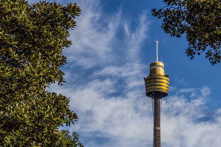 Sydney tower view from park