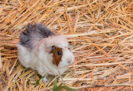 Hamster quietly resting in the farm on a warming day by itself