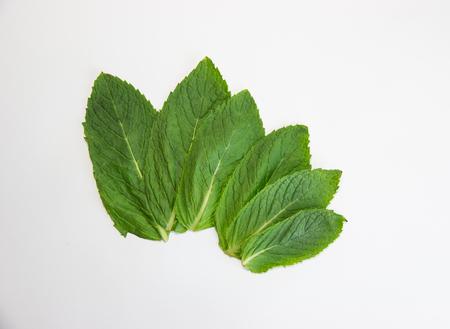 fresh mint leaf on white background