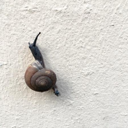 달팽이는 천천히 벽 위로 이동합니다. 스톡 콘텐츠