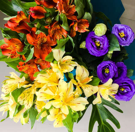 Colourful flower bouquet Stock Photo