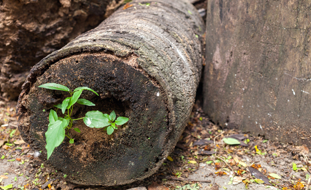 Green plant growing on dead timber. Stock Photo