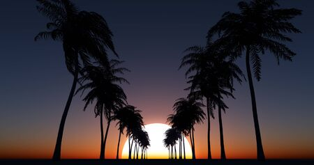 Coconut palm trees over sunset sky
