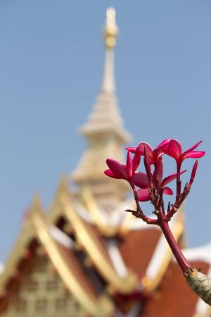 plumeria in Thai city pillar and blue sky background  photo