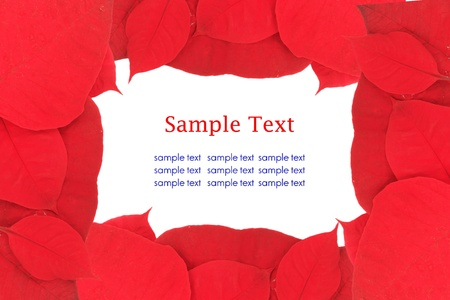 red leaves background isolated on white with sample text Stock Photo - 21059633