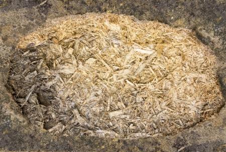 sawdust: grunge background of sawdust