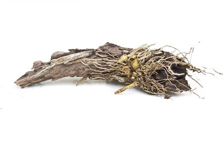 dode bladeren: Vertakken van spruit op de dode boom
