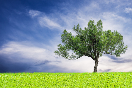 blue green background: green tree and grass blue sky background Stock Photo
