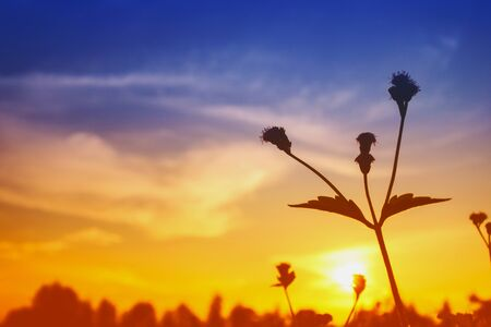 The silhouette of a grass flower with the sky as the background. Archivio Fotografico
