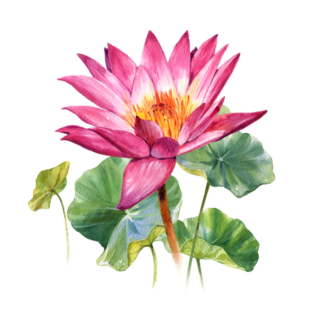 Watercolor illustration painting of leafs and lotus on white background