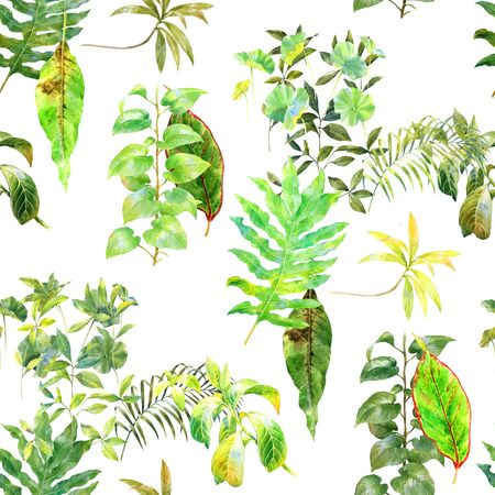 liana: watercolor painting of green leaves on white background Stock Photo