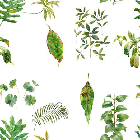 xwhite: watercolor painting of green leaves on white background Stock Photo
