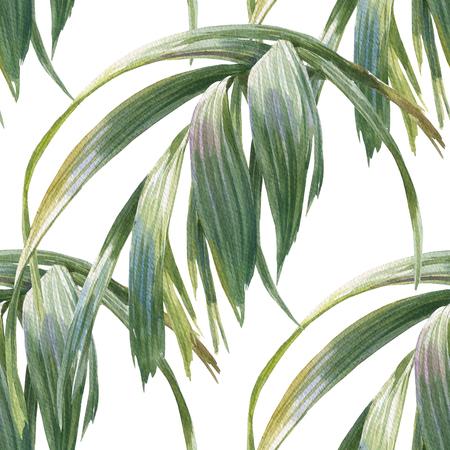葉、白い背景の上のシームレスなパターンの水彩イラスト 写真素材
