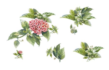 watercolor painting of leaves and flower, on white background  Stock Photo