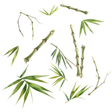 Illustrazione ad acquerello dipinto di foglie di bambù, su sfondo bianco Archivio Fotografico