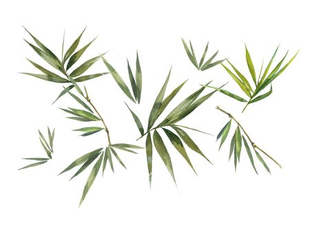 Watercolor illustration painting of bamboo leaves, on white background Imagens