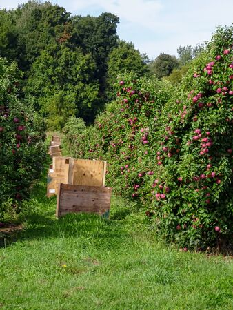 Stacked Apple Crates in Orchard