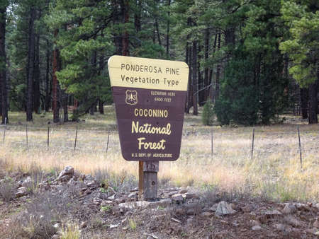 Coconino National Forest Sign in the park