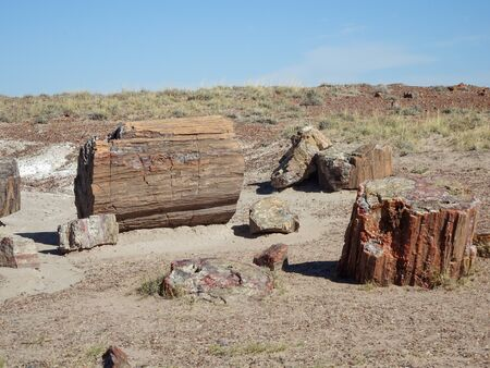 This is Crystal Forest Petrified Wood located in The Petrified Forest National Park