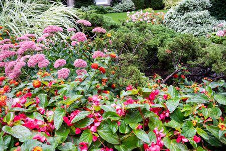 Gruppo di fiori in piena fioritura in un giardino estivo all'aperto