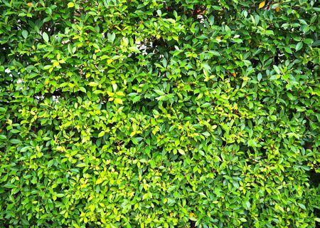 green leaves Stockfoto - 133462588