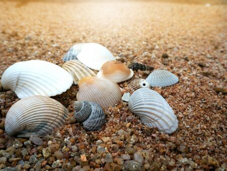 Beach scene in summer vacation holiday with sand, sea shells