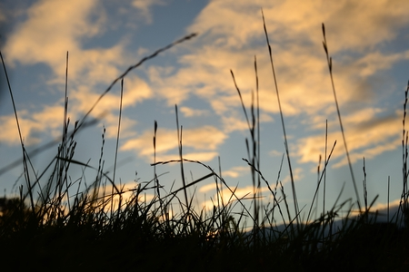 Silhouette of of long grass against a moody sky in the evening