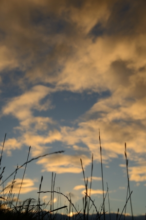 Silhouette of of long grass against a moody sky in the evening  photo
