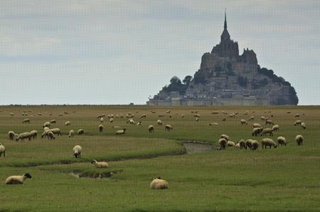 mont saint michel: Mont Saint Michel and sheep Stock Photo