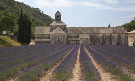 herbs de provence: Senanque Abbey with Lavender
