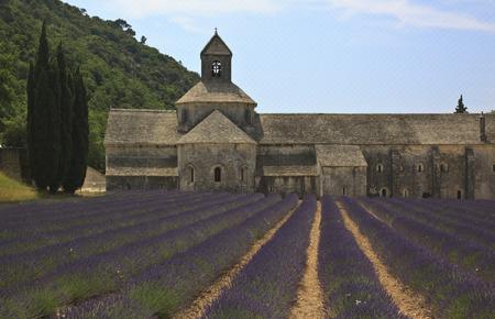 senanque: Senanque Abbey with Lavender